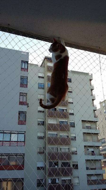 Gatos Roem Rede De Proteção?